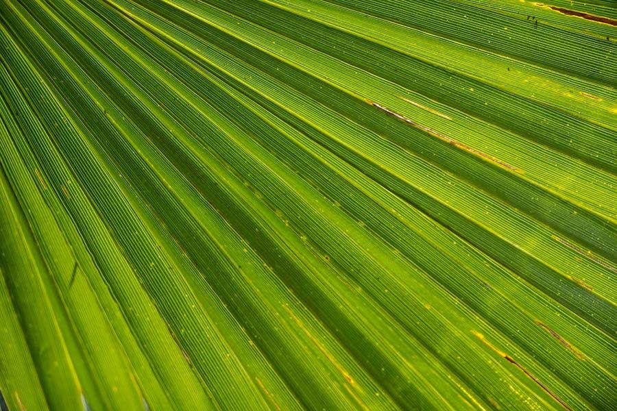 palm-366843_1280