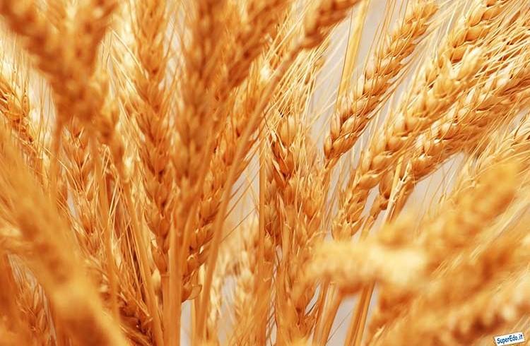 Farine Varvello e Molino Colombo – Lo sponsor ufficiale del cluster cereali a Expo2015, approda ad Agri Travel & Slow Travel Expo con iniziative ricche di gusto
